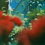 """Pulled Apart By Horses - """"The Haze"""""""